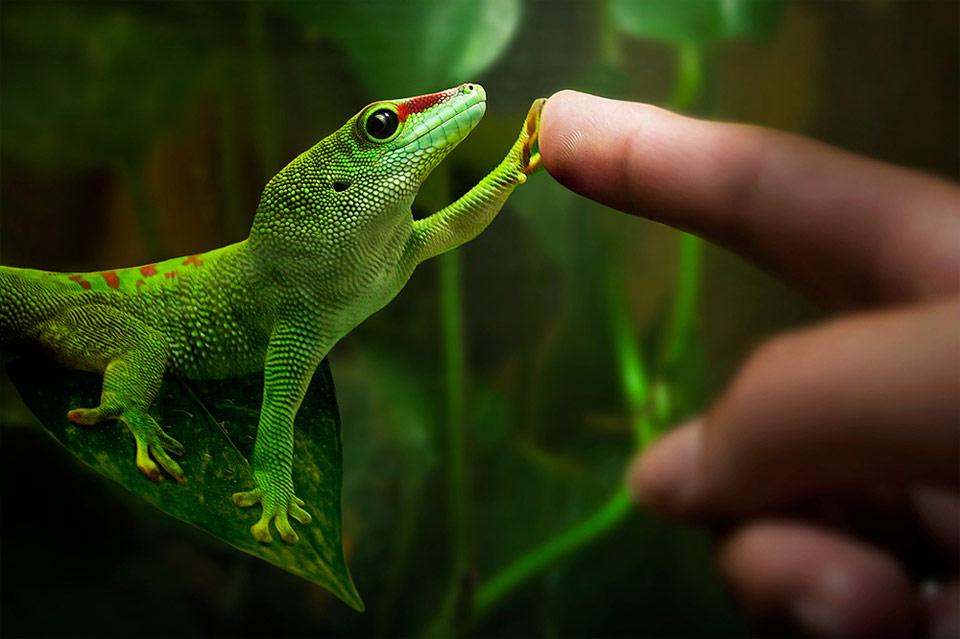 reptiles como mascota